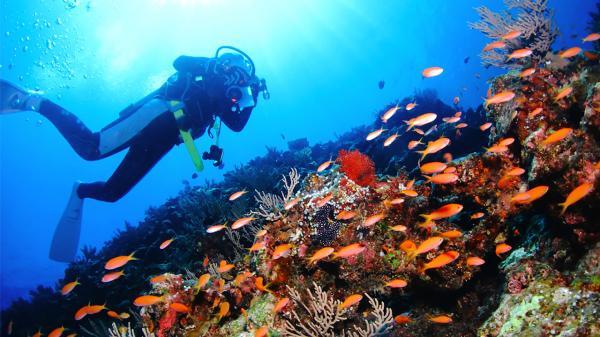 【【沖繩中部】青之洞窟潛水、浮潛體驗(多語教練&免費攝影)