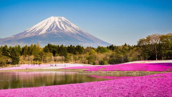 【【東京賞櫻一日遊】富士山芝櫻祭、富士山五合目、草莓吃到飽