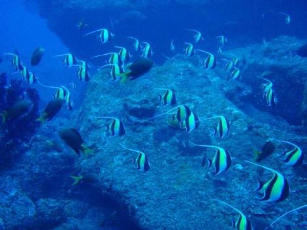【【伊豆群島】東京秘境八丈島執照潛水體驗
