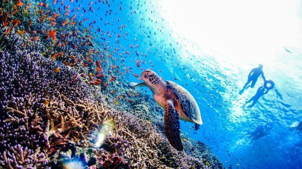 【【伊豆群島】東京秘境八丈島 3小時潛水體驗