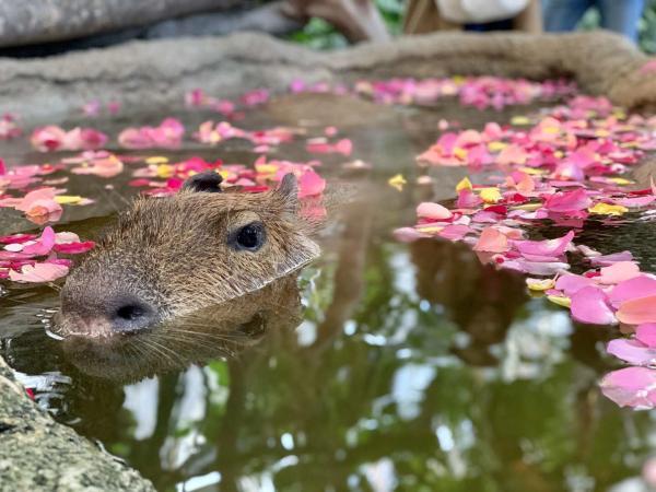 【【關西熱門景點】神戶動物王國門票