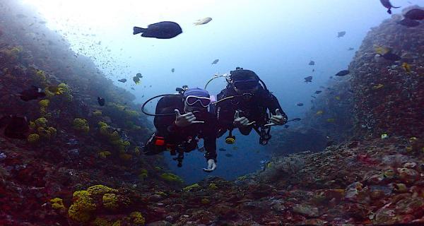 【【東北角龍洞灣】 PADI 開放水域潛水員證照課程Open Water Diver