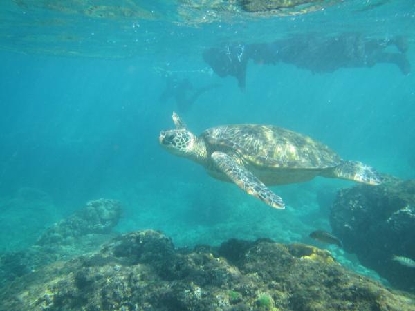 【【小琉球與海龜同游】探索海底浮潛體驗