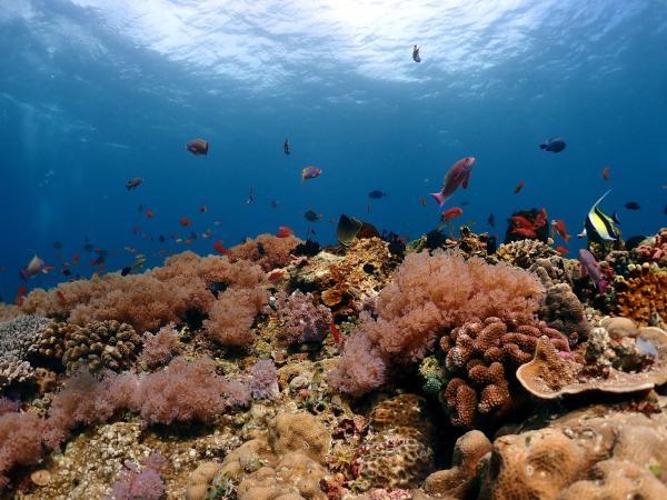 【【東北角龍洞灣】離台北最近的體驗潛水 - 52龍洞潛水中心