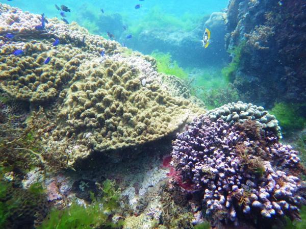 【【海上娛樂雙體驗】新北龍洞SUP板+浮潛活動