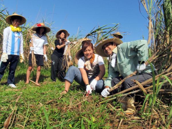 【【沖繩文化體驗】採收甘蔗、黑糖手作體驗