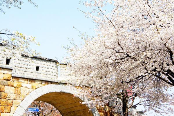 【【首爾近郊一日遊】水原華城+傳統市場美食+熱氣球體驗