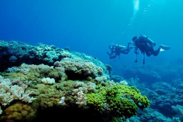 【【國際知名潛點】綠島體驗潛水、免費攝影