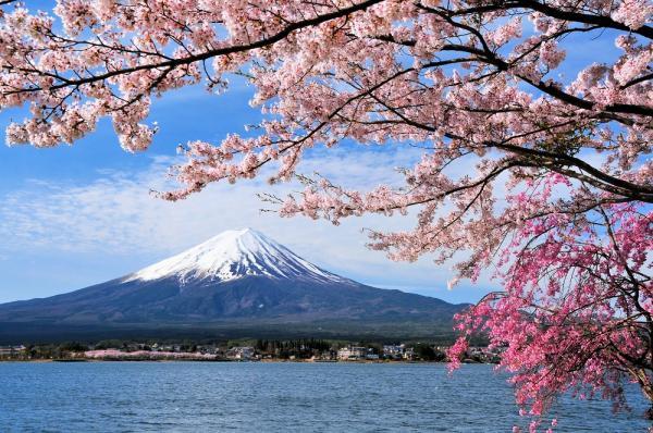 【【飛驒高山至東京巴士單程券】諏訪湖・富士山河口湖一日遊