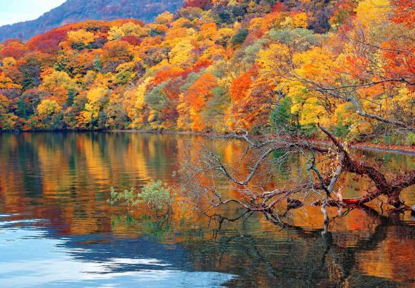 【【東北青森拼車一日遊】奧入瀨、十和田湖、弘前公園、津輕藩睡魔村