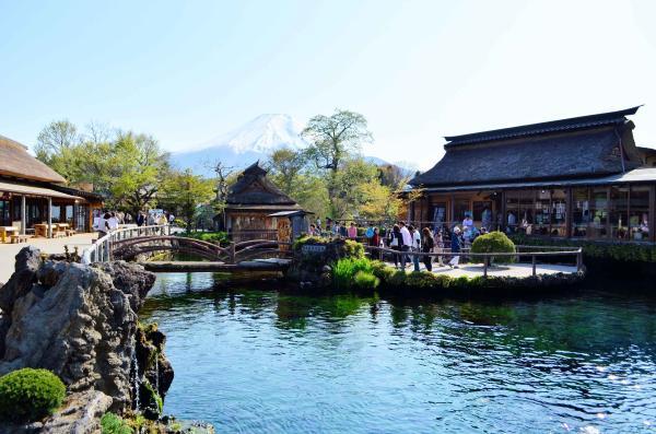 【【東京近郊一日遊】河口湖薰衣草、新倉淺間公園、忍野八海、採摘櫻桃