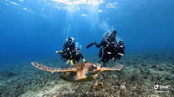 【【與海龜有約】小琉球體驗潛水(免潛水執照)