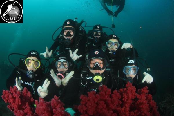 【【探索海底世界】濟州島潛水體驗