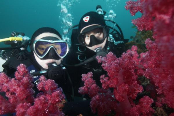 【【探索海底世界】濟州島專業潛水(限持有潛水證書者)