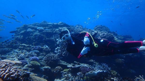 【【沖繩中部潛水】青之洞窟潛水體驗(中文翻譯&免費攝影)