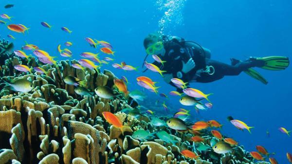 【【沖繩潛水入門考證】 PADI開放水域潛水員課程 最快3天完成(中英粵日四語對應)