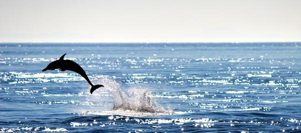 【【九州一日遊】熊本出海看海豚、溫泉體驗(熊本出發)