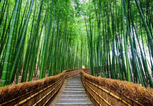 【【京都奈良一日遊】嵐山漫遊三小時・奈良公園