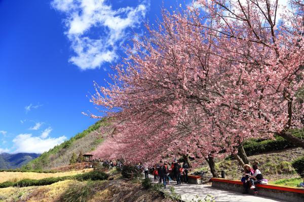 【【武陵農場一日遊】武陵農場、幾米公園(台北出發)