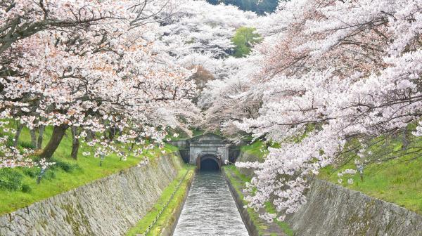 【【京都巡禮】SKY BUS.環遊京都兜風去