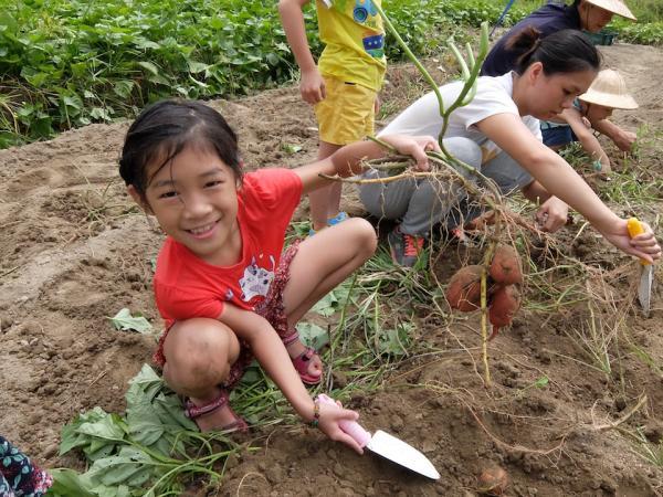 【【帶著孩子體驗農家趣】金山汪汪地瓜園控窯體驗