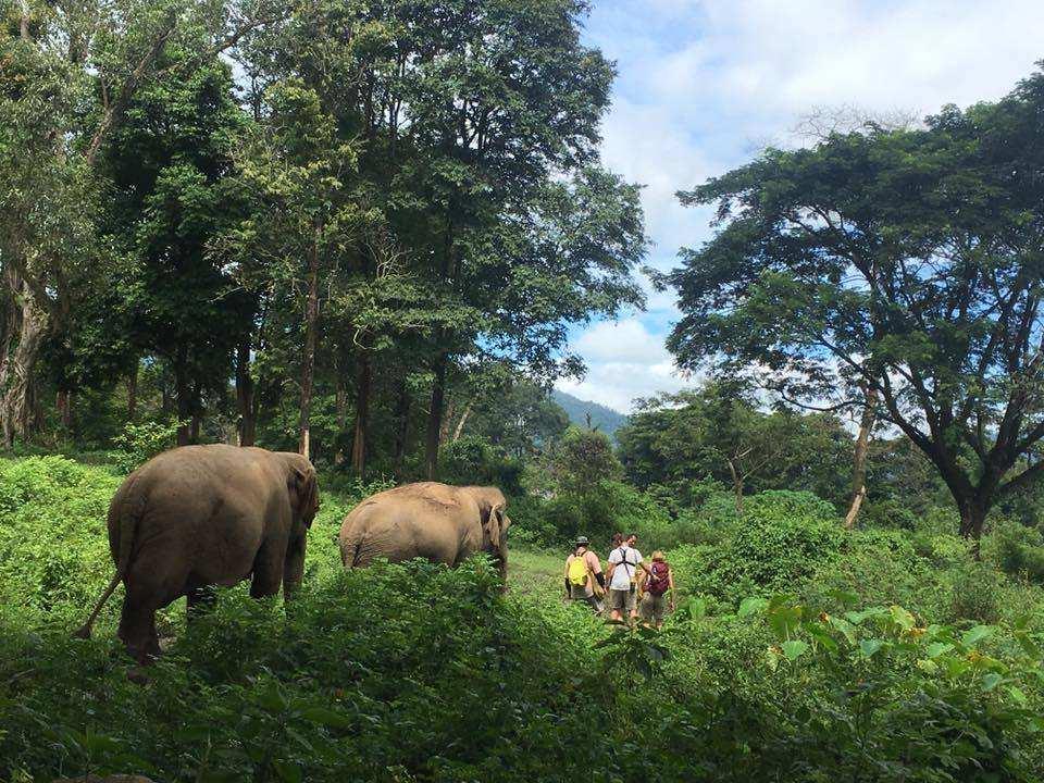 【走進大象友善園區】清邁大象自然公園一日體驗