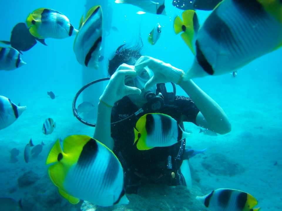 【探索海底世界】關島水肺潛水體驗(免潛水執照)