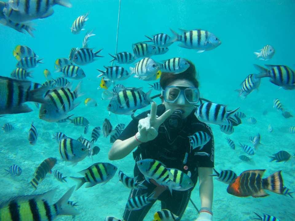 【グアム水上アクティビティプラン】ライセンス不要でダイビング、シレーナ号でイルカウォッチング、水上オートバイ(ホテル送迎付き)