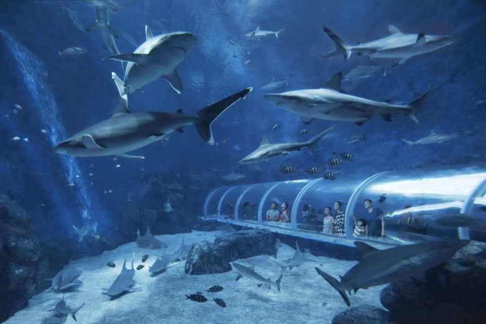 【セントーサ島の水族館】シー・アクアリウム入場チケット+お買い物チケットプレゼント
