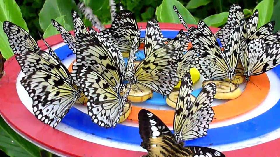 【聖淘沙新玩法】新加坡蝴蝶公園+昆蟲王國門票