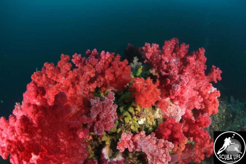 【探索海底世界】濟州島專業潛水(限持有潛水證書者)