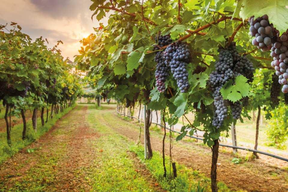 【義大利品酒之旅】基安蒂酒莊、蒙特里久尼小鎮半日遊(佛羅倫斯出發)