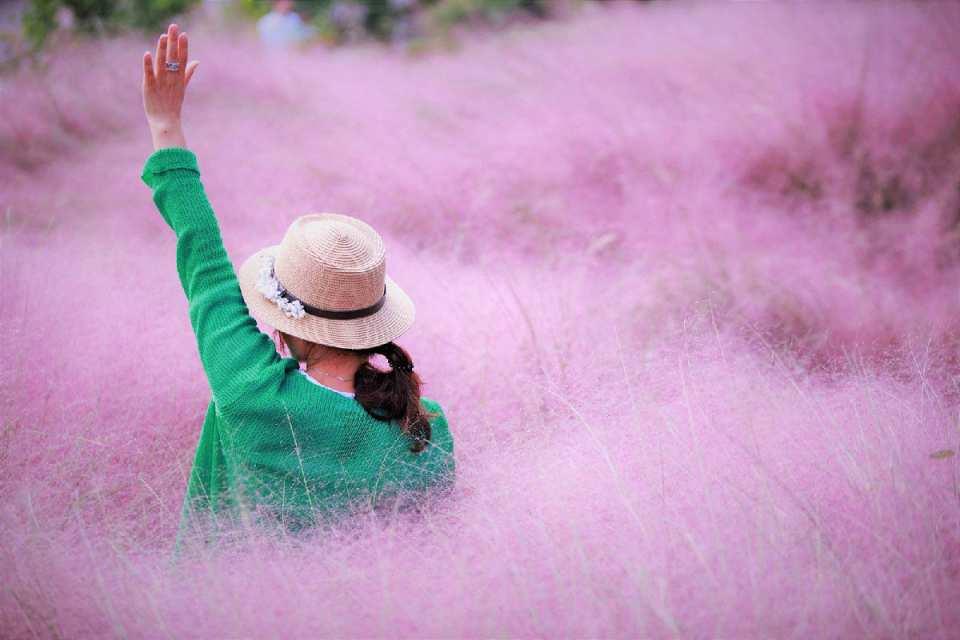 【首爾旅遊新玩法】江南蠶院漢江公園+首爾天空公園 粉黛亂子草 唯美專業攝影