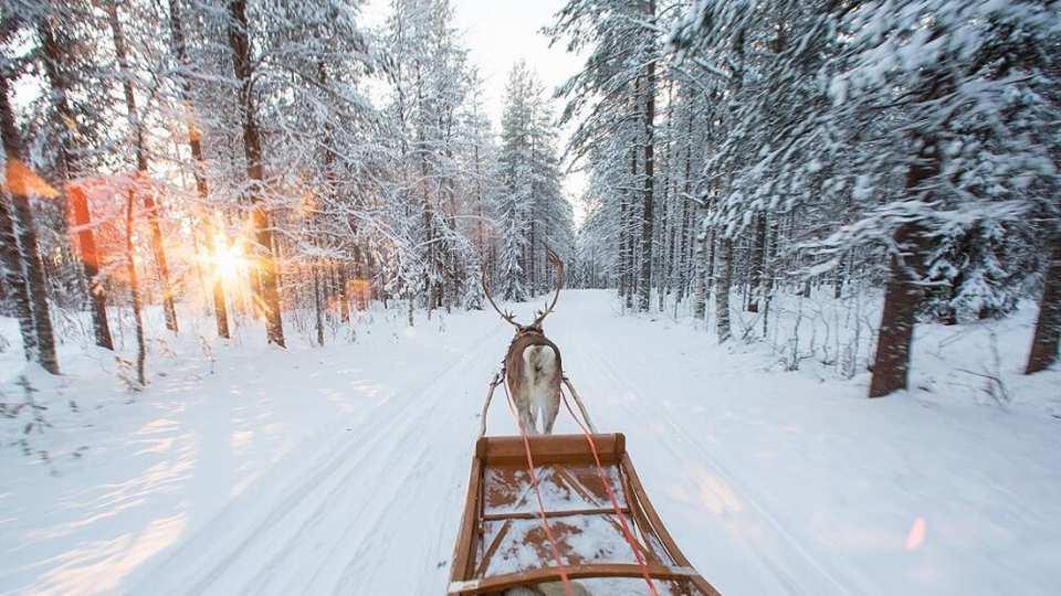 【芬蘭馴鹿雪橇探險之旅】北極圈森林馴鹿雪橇體驗+馴鹿牧場+拉普蘭特色小吃半日遊
