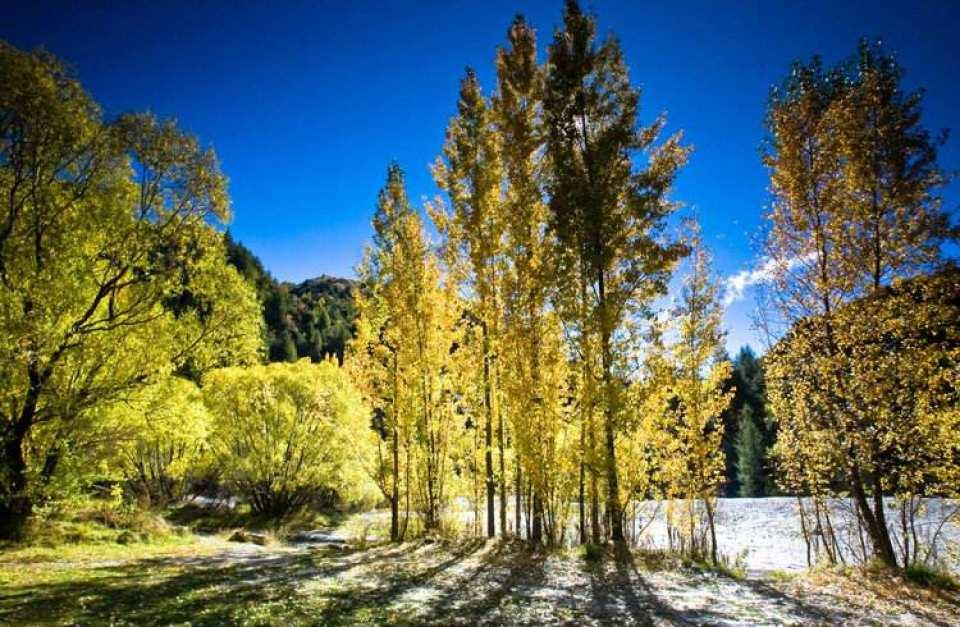 【品味紐西蘭南島自然風光】皇后鎮、箭鎮、布吉斯頓谷、格林諾奇包車一日遊(中文導覽)
