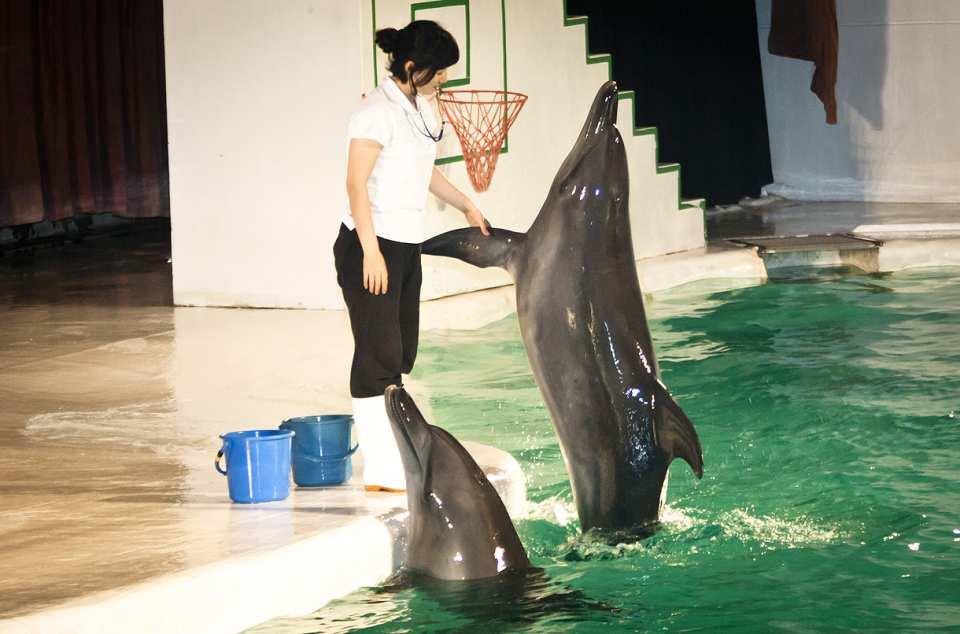 【大小朋友都會愛】濟州島太平洋樂園動物表演