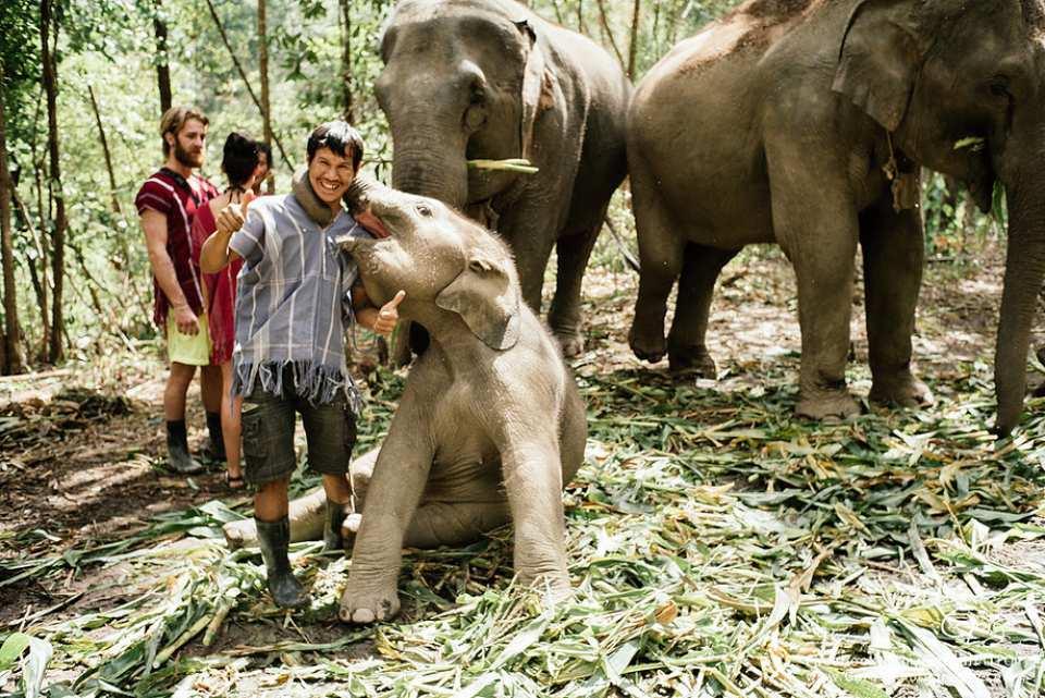 【來去和大象住一晚】2天1夜大象友善體驗營