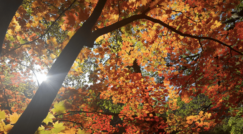 【期間限定・秋の韓国】 雪岳山国立公園で紅葉狩り+ロープウェー1日ツアー:ソウル出発