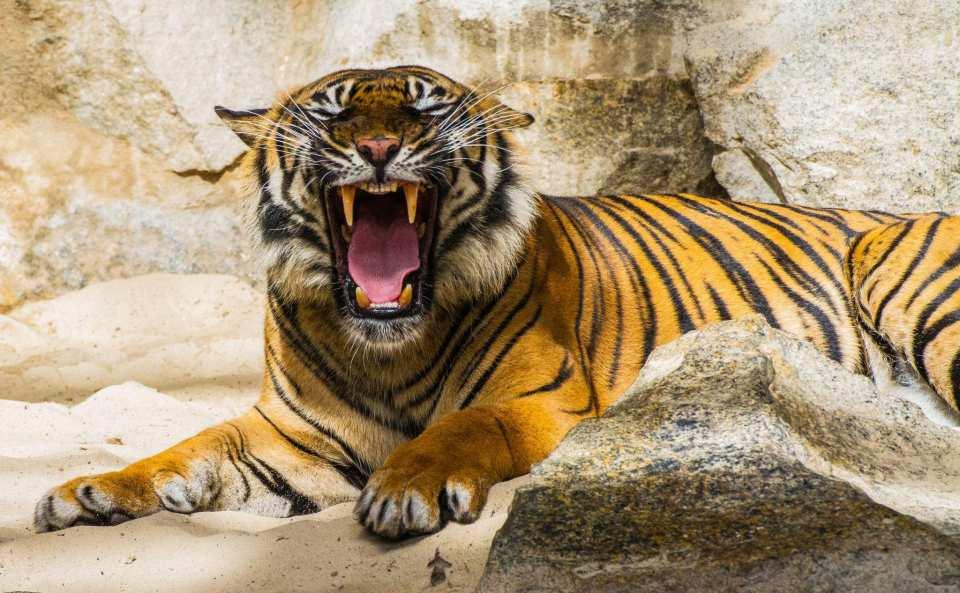 【最安値!】タイ最大の野生動物園・ サファリワールド割引入場チケット