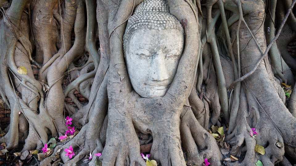 kkday 行程分析 泰國景點推薦全攻略 大城府 樹中佛陀